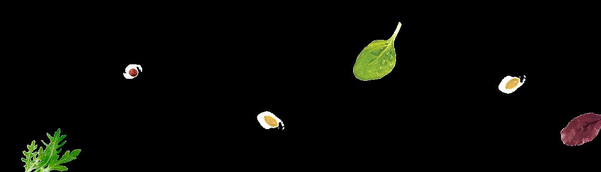 Atrezzo hojas
